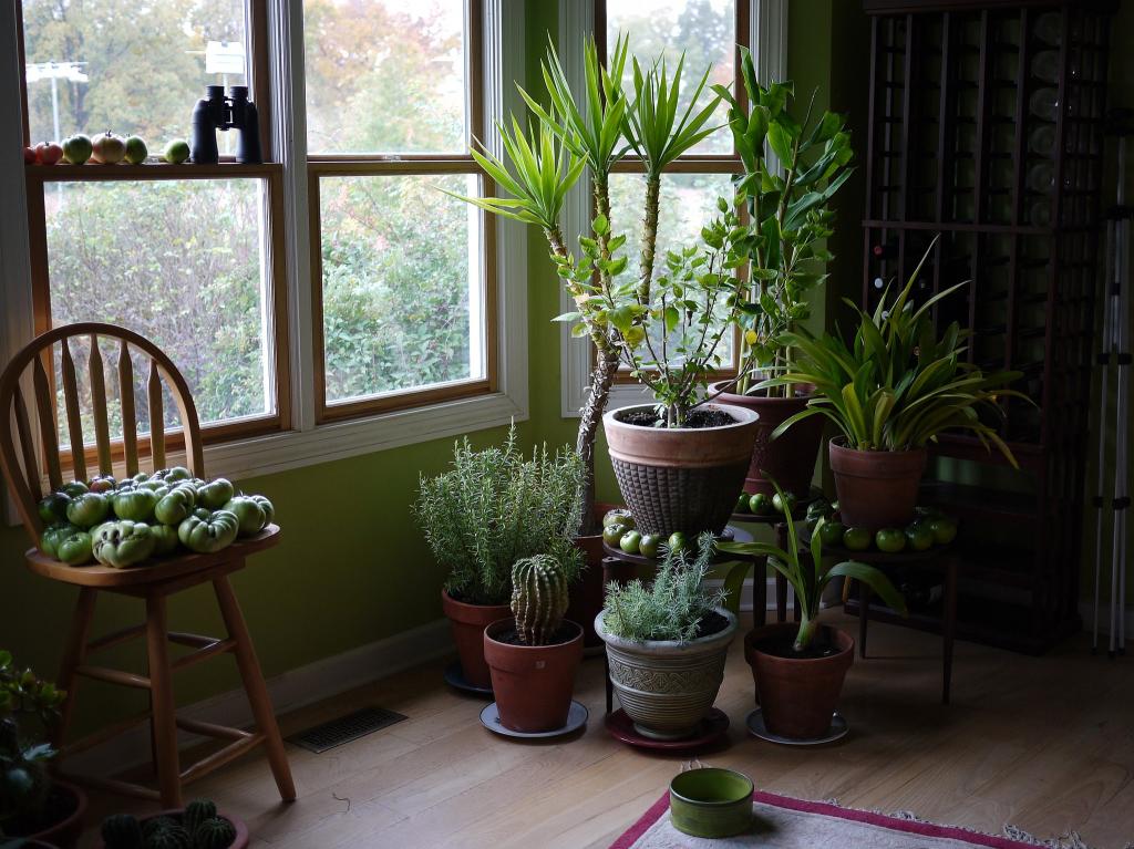 צמחי בית